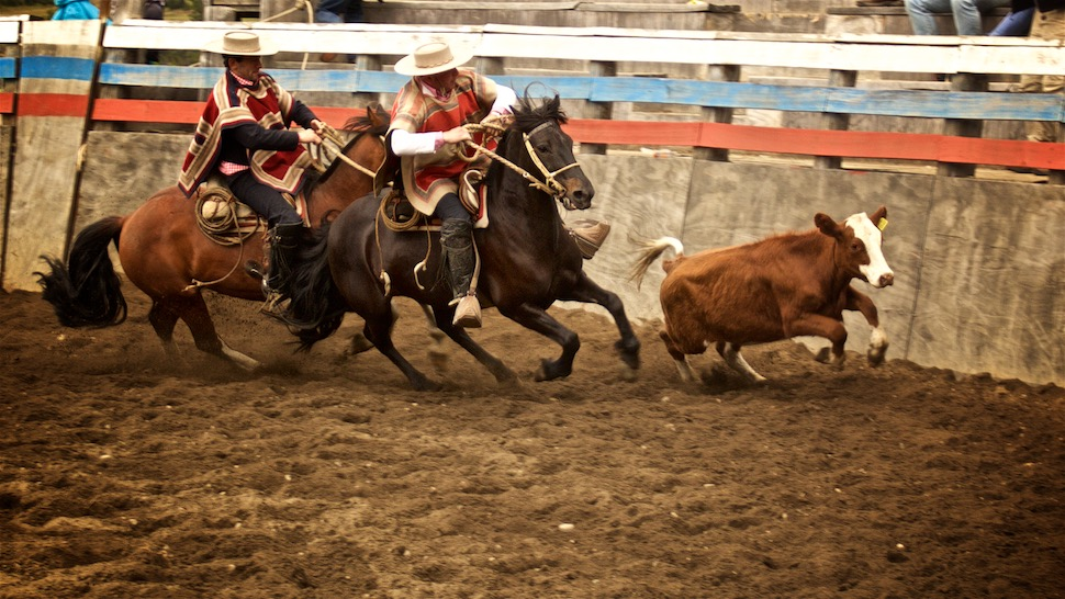 Rodeo_11__MG_6586